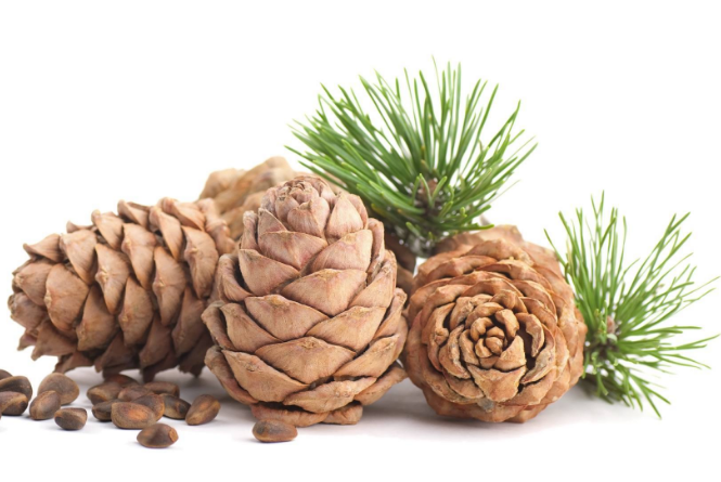 cedarwood essential oil for meditation